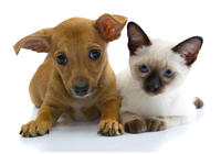 KITTY & PUPPY 2021.jpg